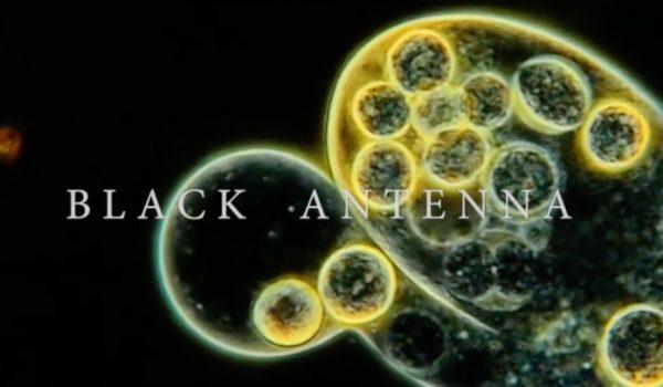 Resultado de imagem para Black Antenna alice in chains